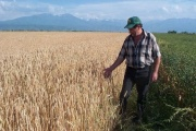 Union of Farmers of Kazakhstan against lease of farmland by foreigners