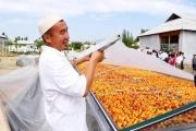 Donors help Tajikistan, Kyrgyzstan, Uzbekistan producers market dried apricots